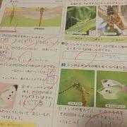 コムギ3年生、一気に返ってきたテスト